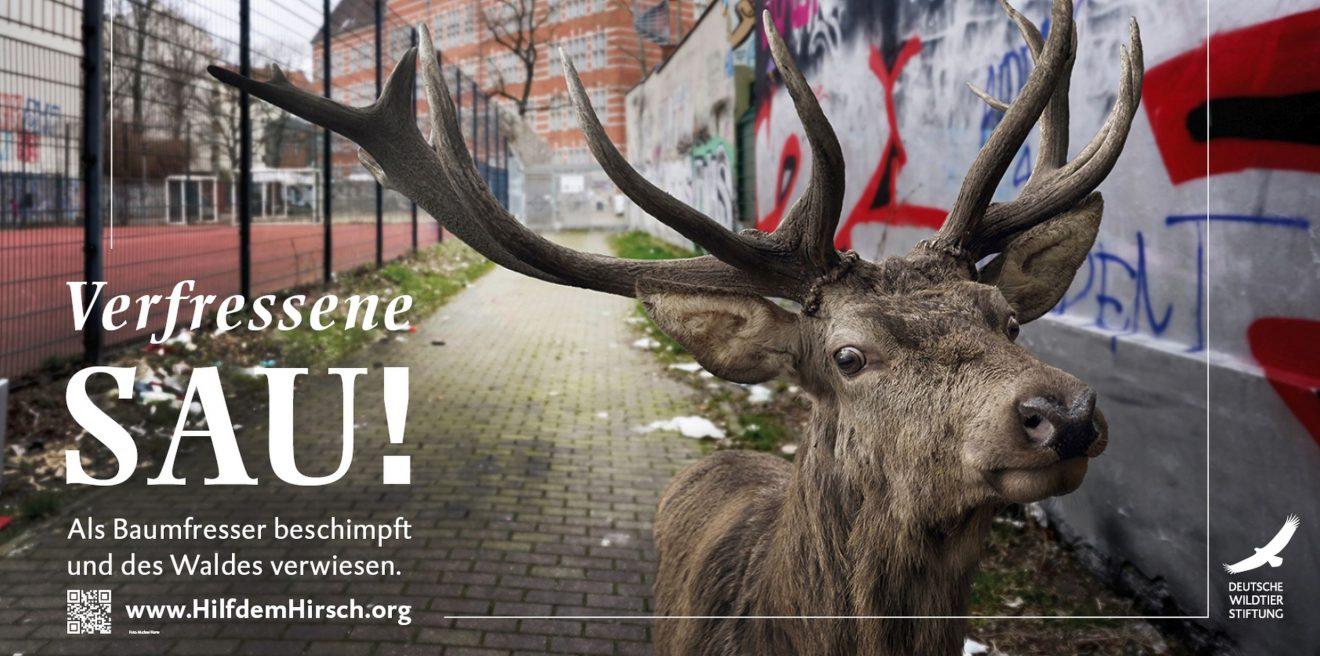 Verfressene Sau! Baden-Württemberg verweist den Hirsch des Waldes
