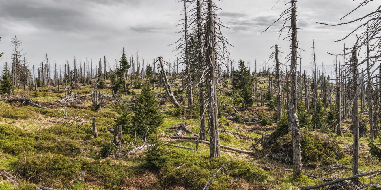 SWR-Beitrag zum Thema Waldschutz: Nehmt den Förstern den Wald weg