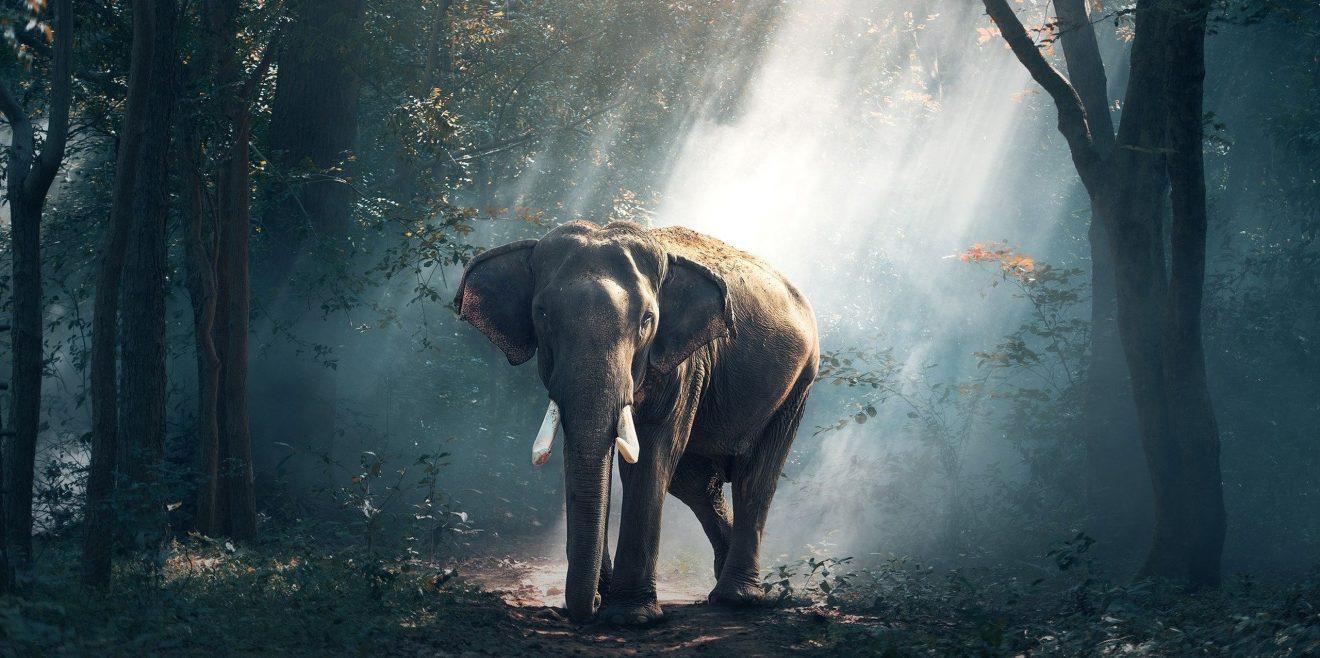 """Forscher schlagen Alarm - """"Living Planet Reports"""" zeigt dramatischen Schwund der Wildtierdiversität"""