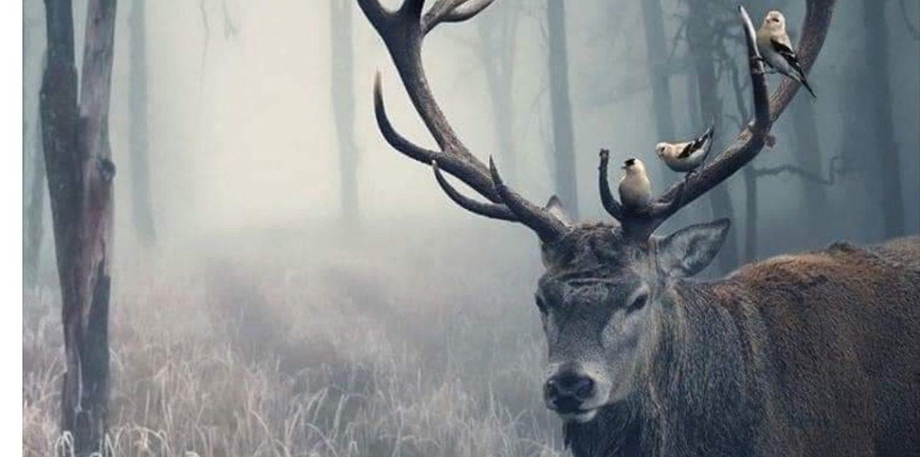"""""""...Das Herz eines Menschen der sich der Natur entfremdet wird hart..."""""""