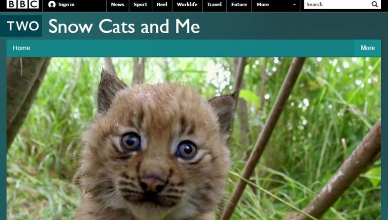 Videobeitrag: Finding Kittens