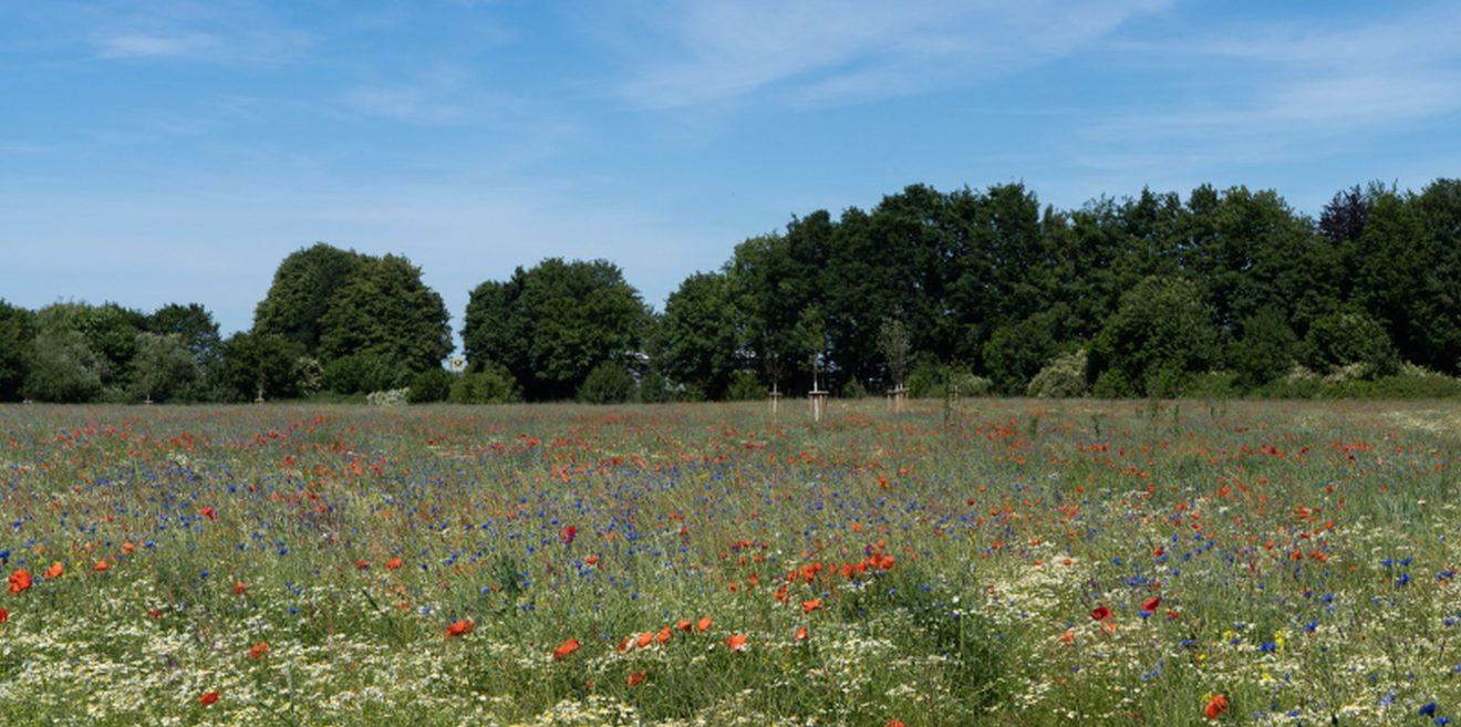 Deutsche Wildtier Stiftung: Bunte Biomasse weiter auf Erfolgskurs