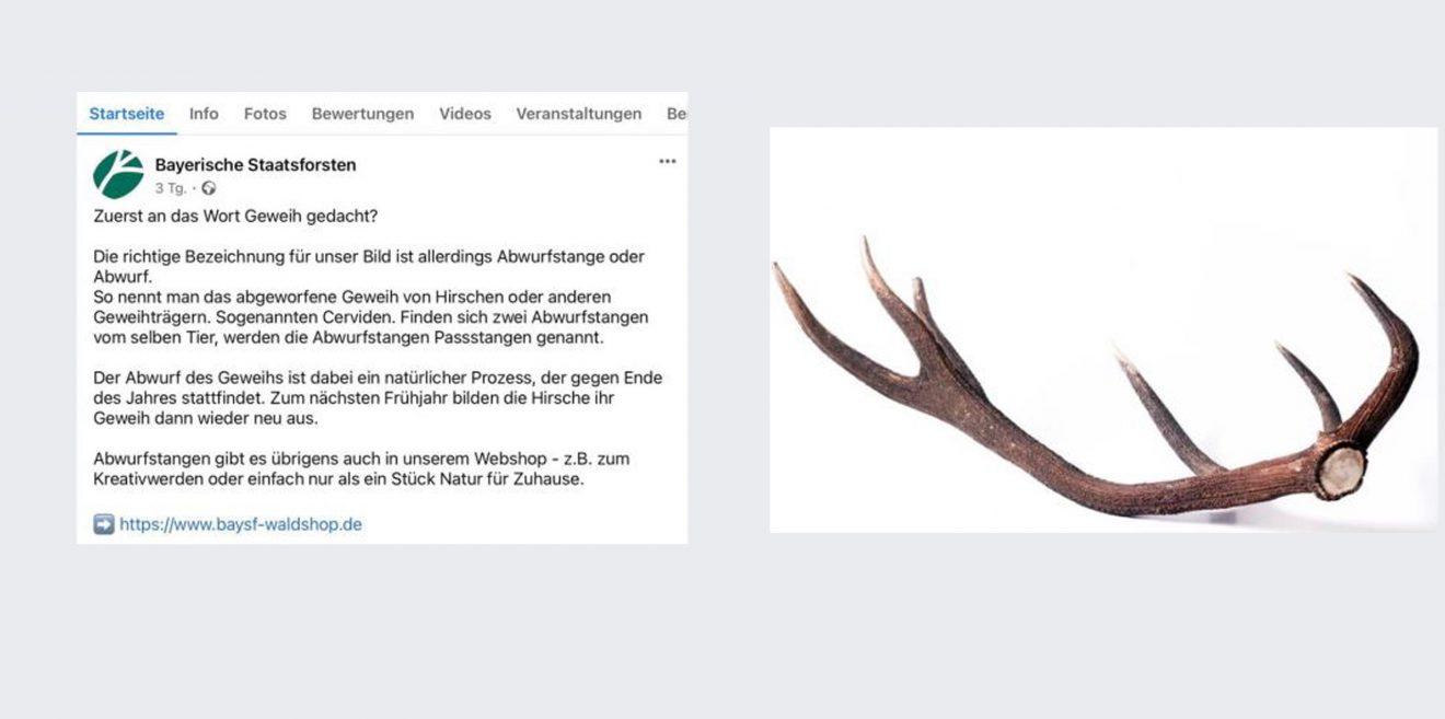 Steinbock statt Gams - Reh statt Hirsch - Welche Verwechslung kommt als Nächstes?