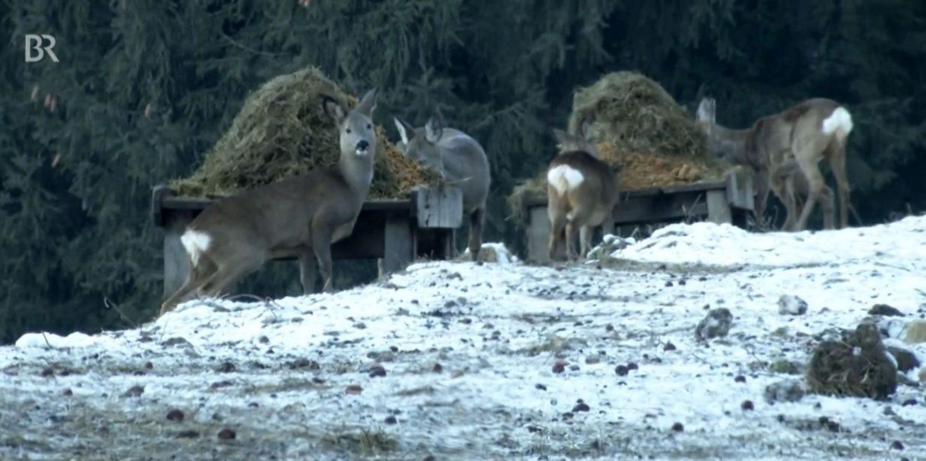 (c)Screenshot BR-Videobeitrag - Freizeit auf Kosten der Tiere