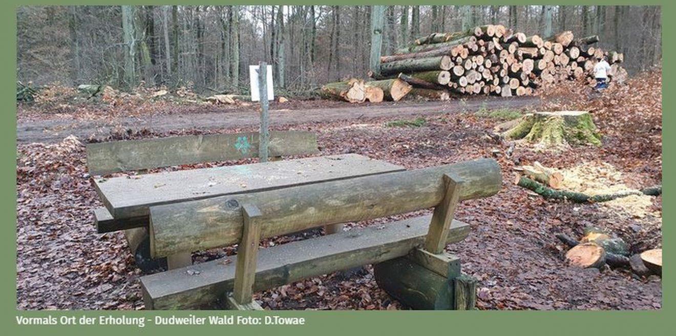 Bürgerinitiative Waldschutz – Forstfrevel im Saarland