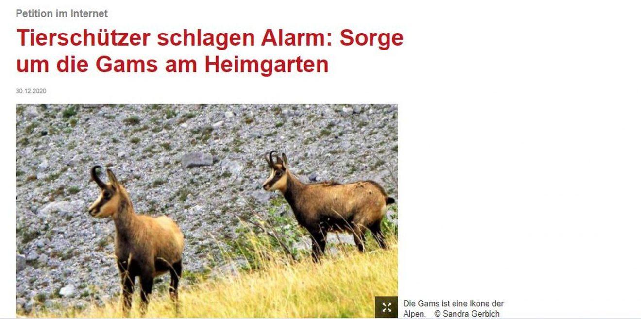 Bericht im Gelben Blatt - Tierschützer schlagen Alarm