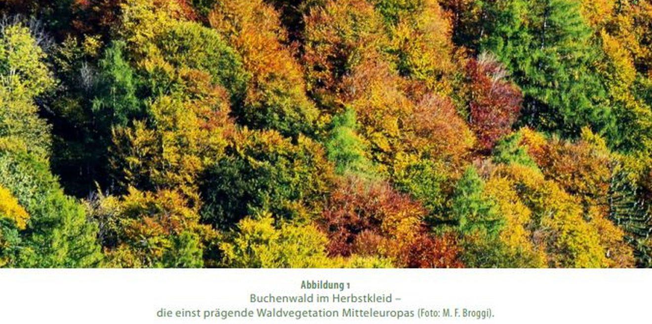 Waldbau für die Zukunft