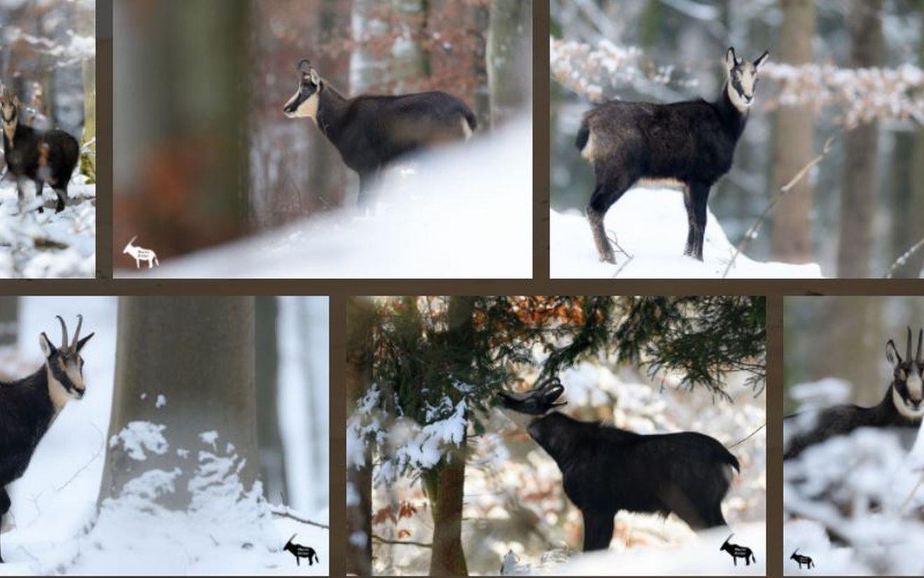 Schwarz auf Weiß - Die Wintergams