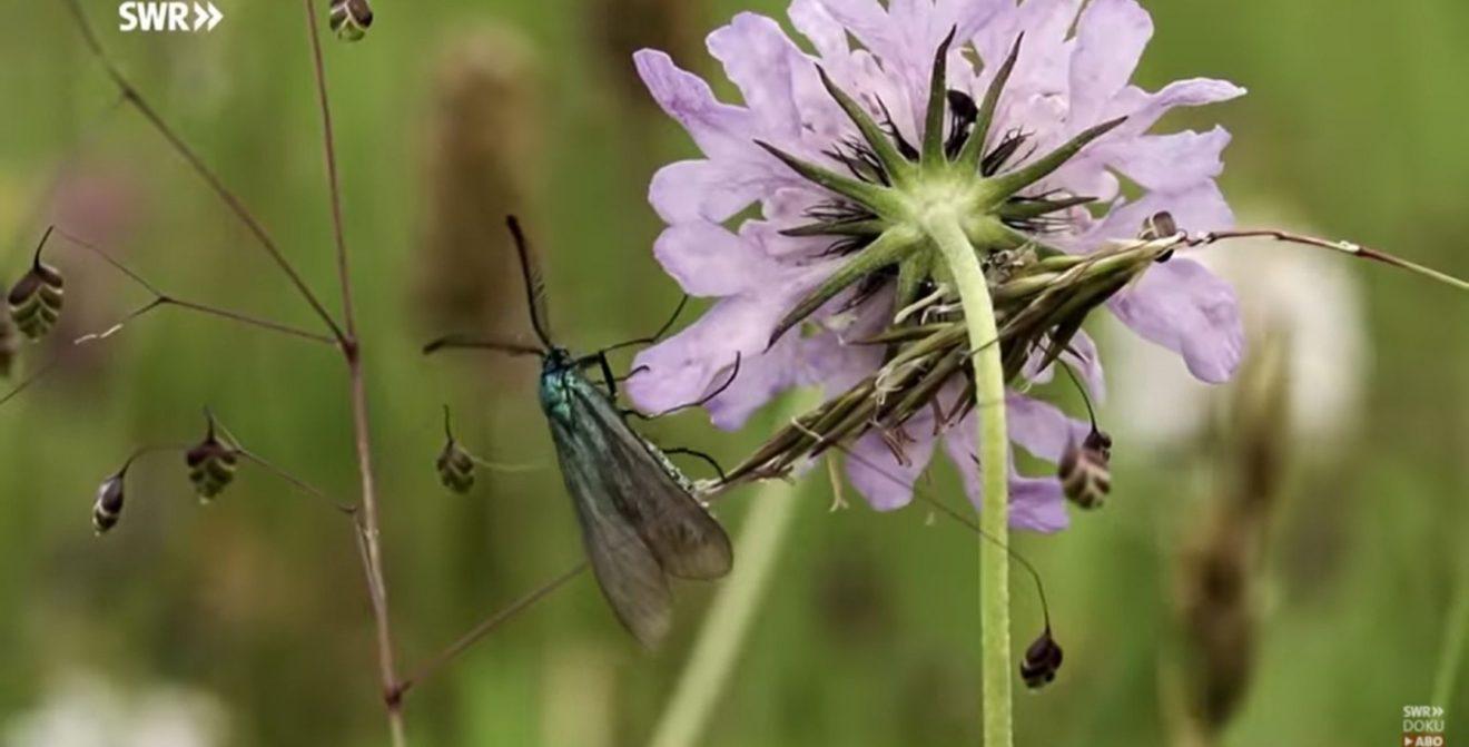 Insektenvielfalt - akut bedroht