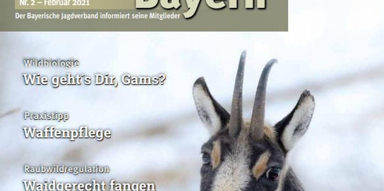 (c)Wildes Bayern - Screenshot Jagd in Bayern