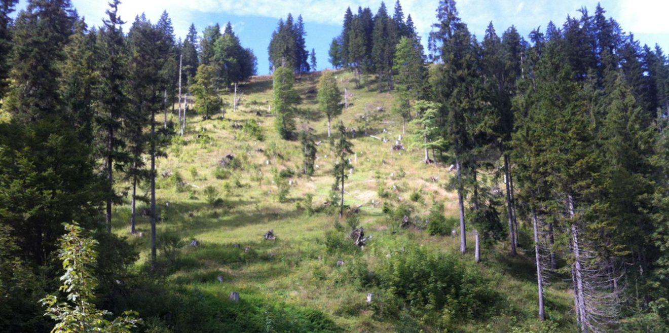 Zu viel Wald ist ungesund