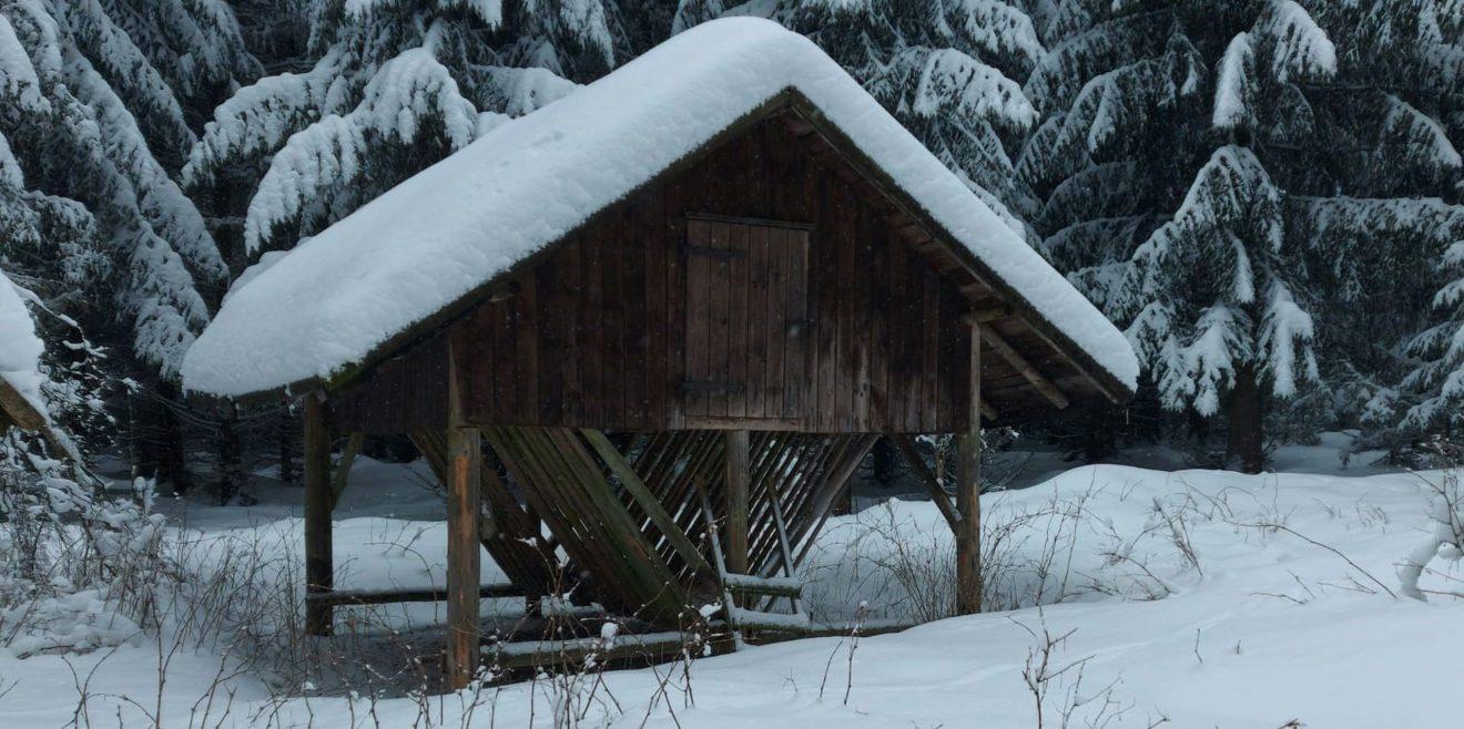Sächsische Landesforste planen den wildfreien Wald