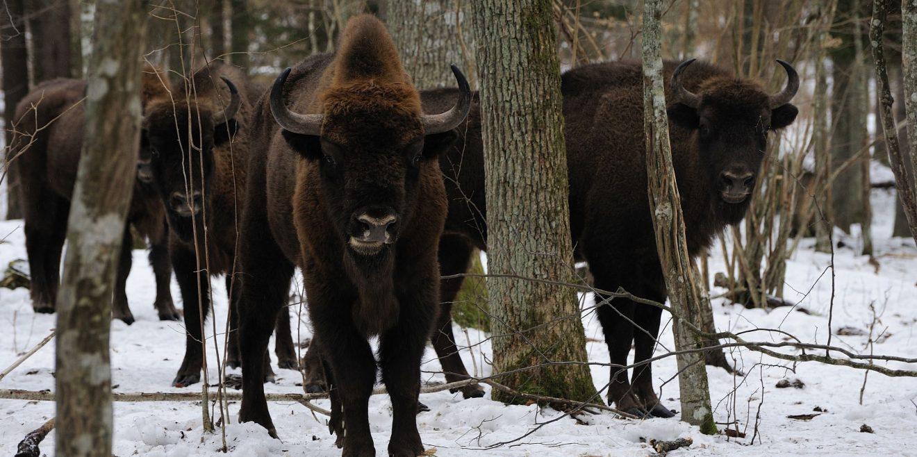Artenschutzprogramm im Tierpark Hellabrunn - Veranstaltungstipps