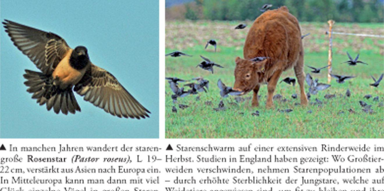 Buchtipp - Die Vogelwelt am Bodensee von Dieter Haas
