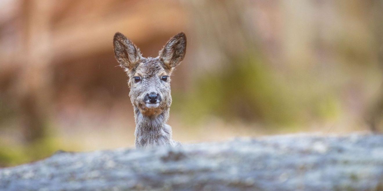 BR- Wildlife im Schlosspark mit Fotos von Marco Schütte