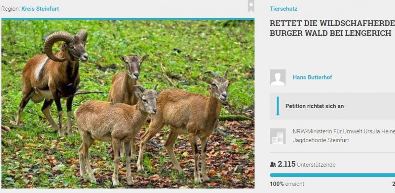 """""""Kampf gegen Ausrottung eines Muffel-Vorkommens"""" - Jetzt Petition unterschreiben"""