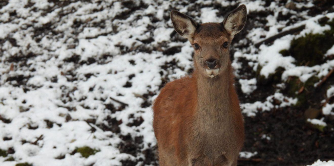 Wald gegen Wild - Förster gegen Jäger - Spannender Beitrag im Jagablattl