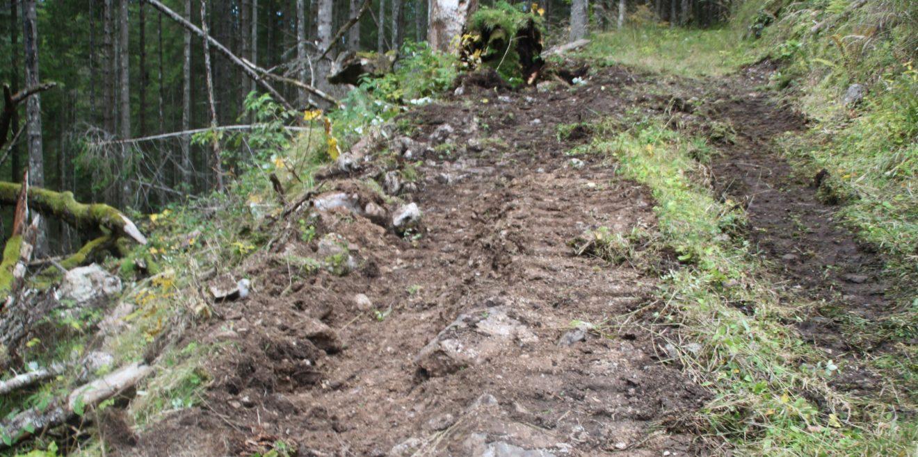 Schützt den Wald - lasst keine Förster mehr rein