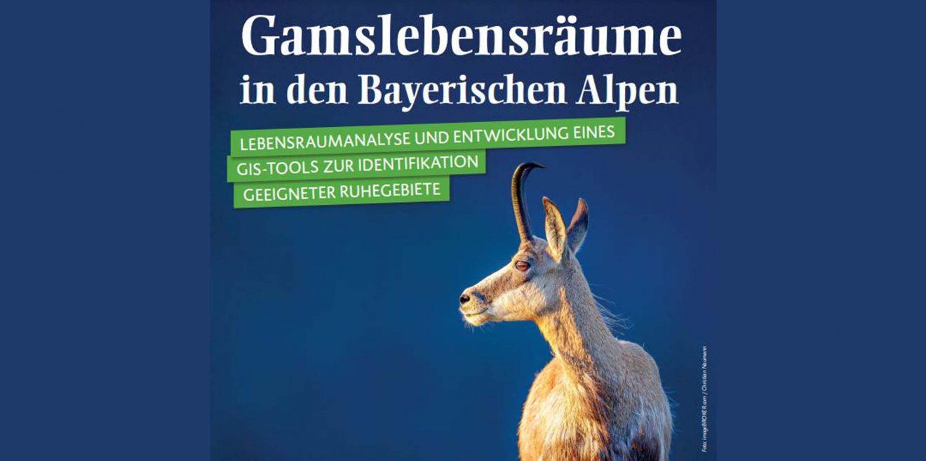 Wo ist Platz für Gams in Bayern?