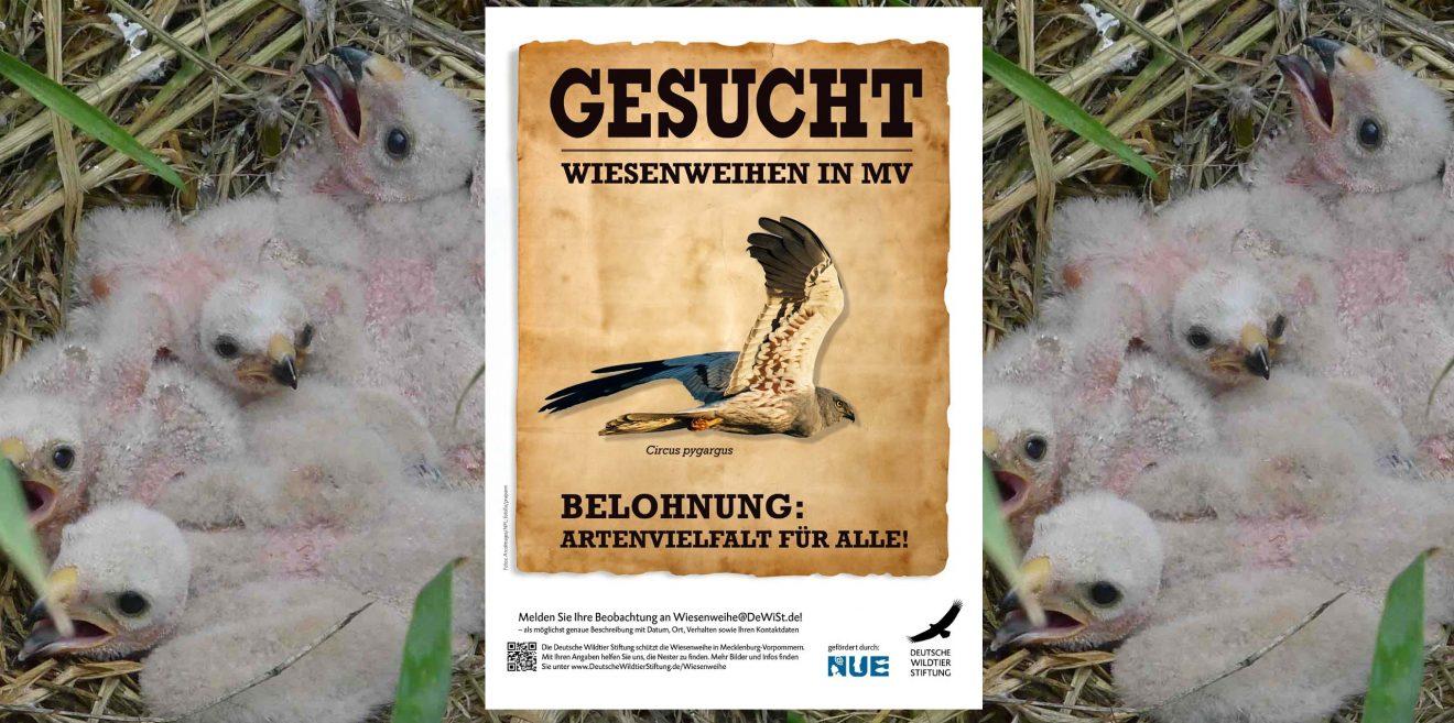 """Deutsche Wildtier Stiftung sucht: """"Wiesenweihe. Belohnung: Artenvielfalt"""""""