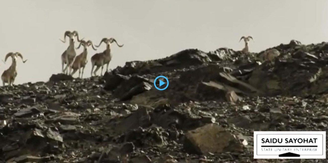 Filmtipp über die Wildtiere in Tadschikistan