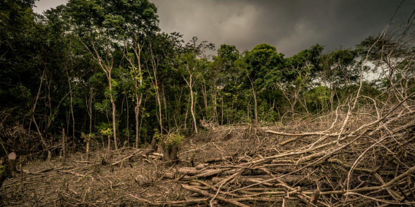 """WWF fordert Ende der """"Ära der Naturzerstörung"""" - EU verantwortlich für Regenwaldvernichtung?"""