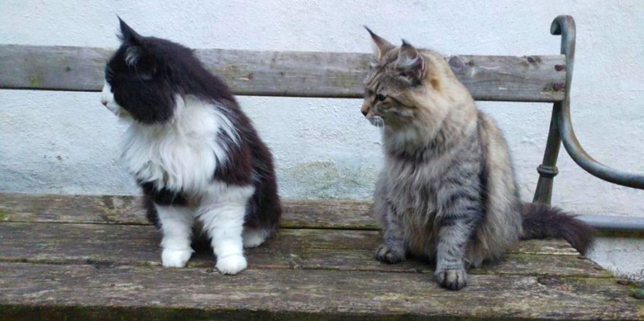Hausarrest oder Halsbandglöckchen? - BR-Bericht über die Gefahr der Hauskatzen für die Vögel