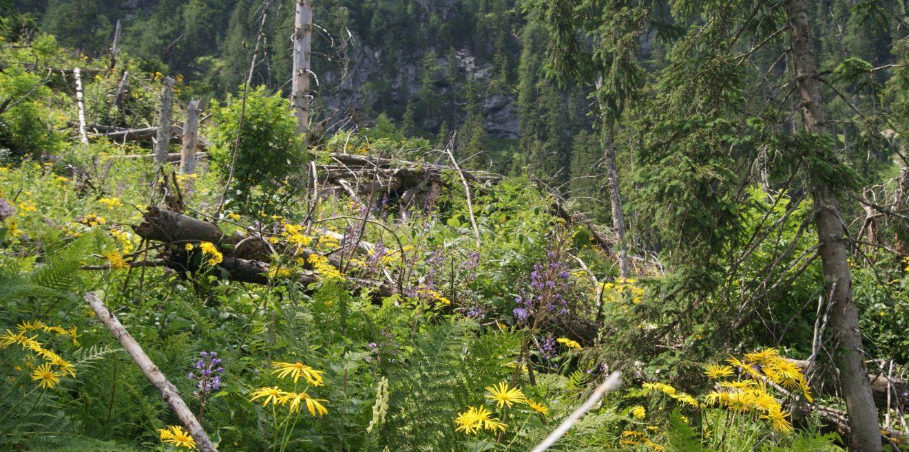 Netzwerk Lebensraum Feldflur fordert Förderprogramm für Wildpflanzenkulturen