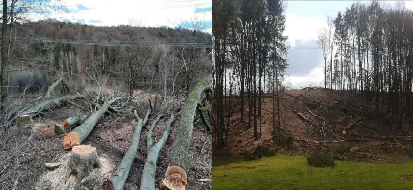 Polizei sucht Zeugen - 3.000 Quadratmeter Bäume illegal gefällt