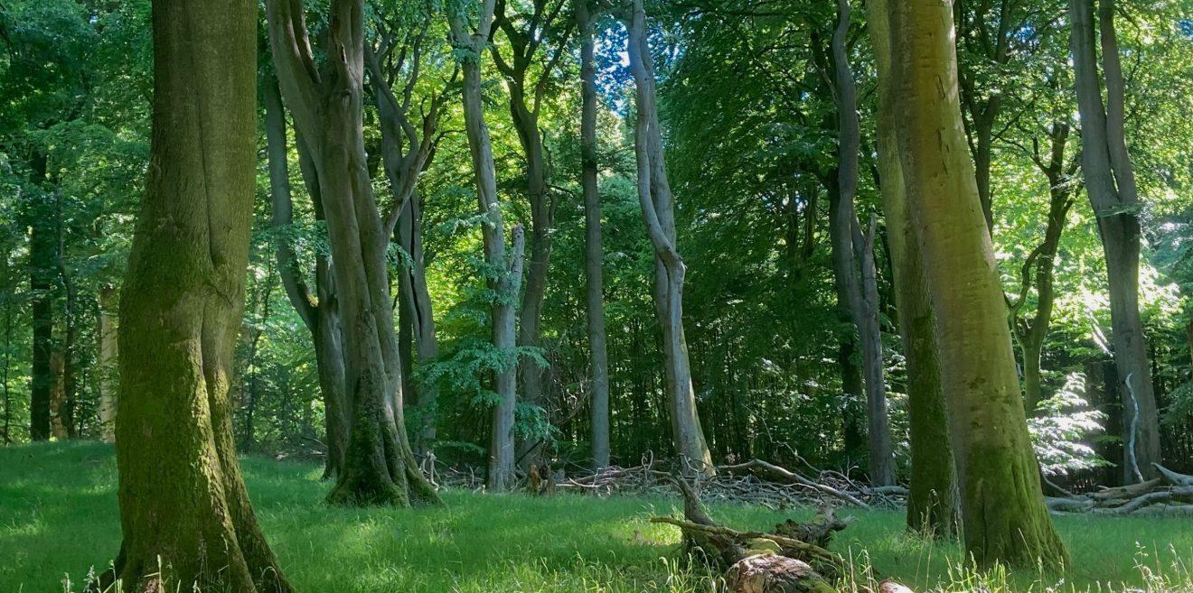 Presseinfo und Offener Brief zum Jubiläum des Welterbes Buchenwälder in Deutschland am 25.6.2021