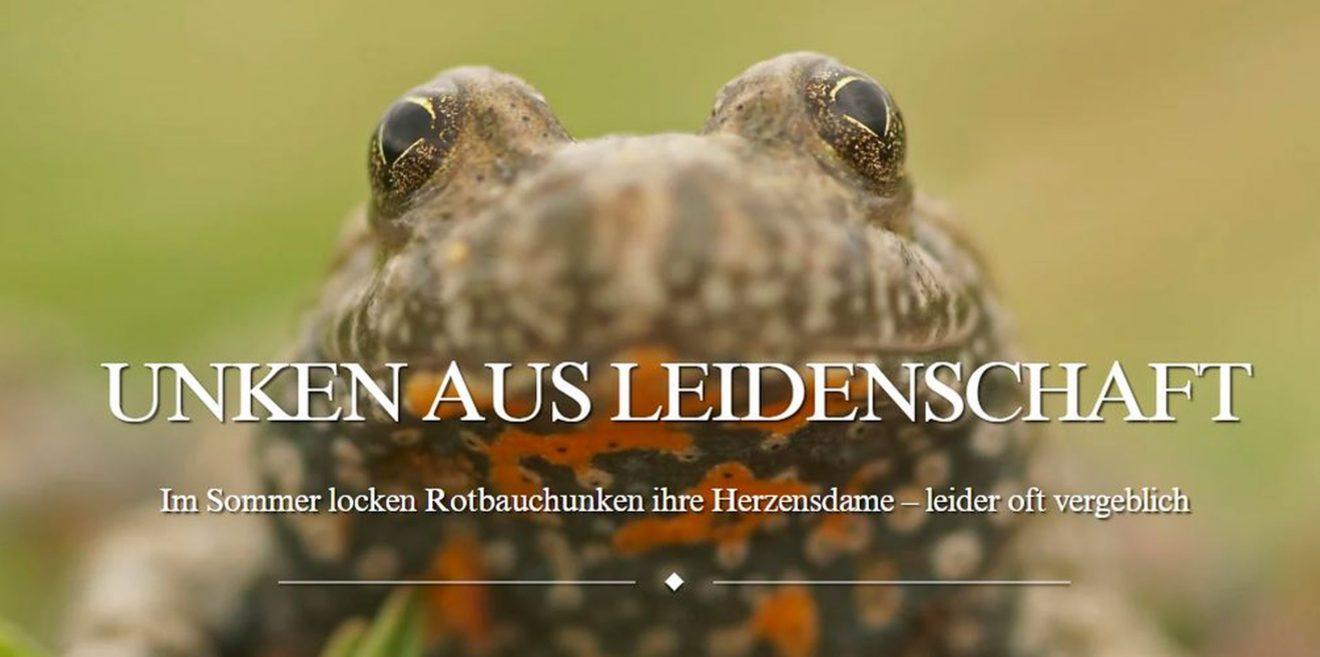 """""""Unken aus Leidenschaft"""" - Beitrag der Deutschen Wildtier Stiftung über die gefährdeten Unken"""