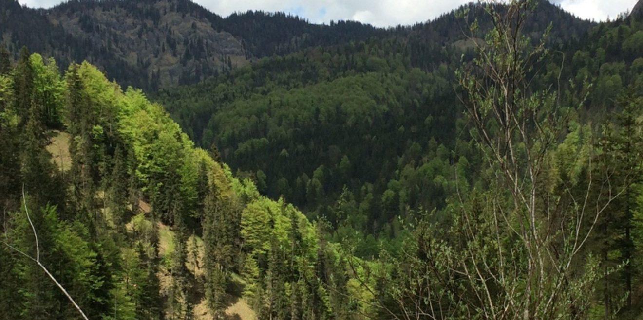 Waldexperte zum Zustand der Wälder