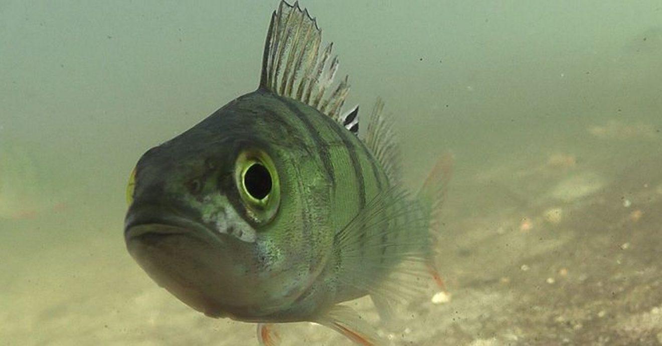 """22. August - """"Tag der Fische"""""""