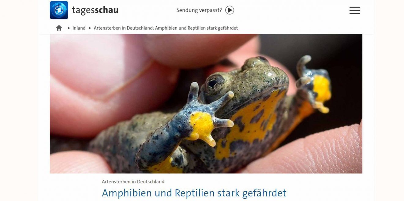 """(c)Screenshot Tagesschau """"Amphibien und Reptilien stark gefährdet"""""""