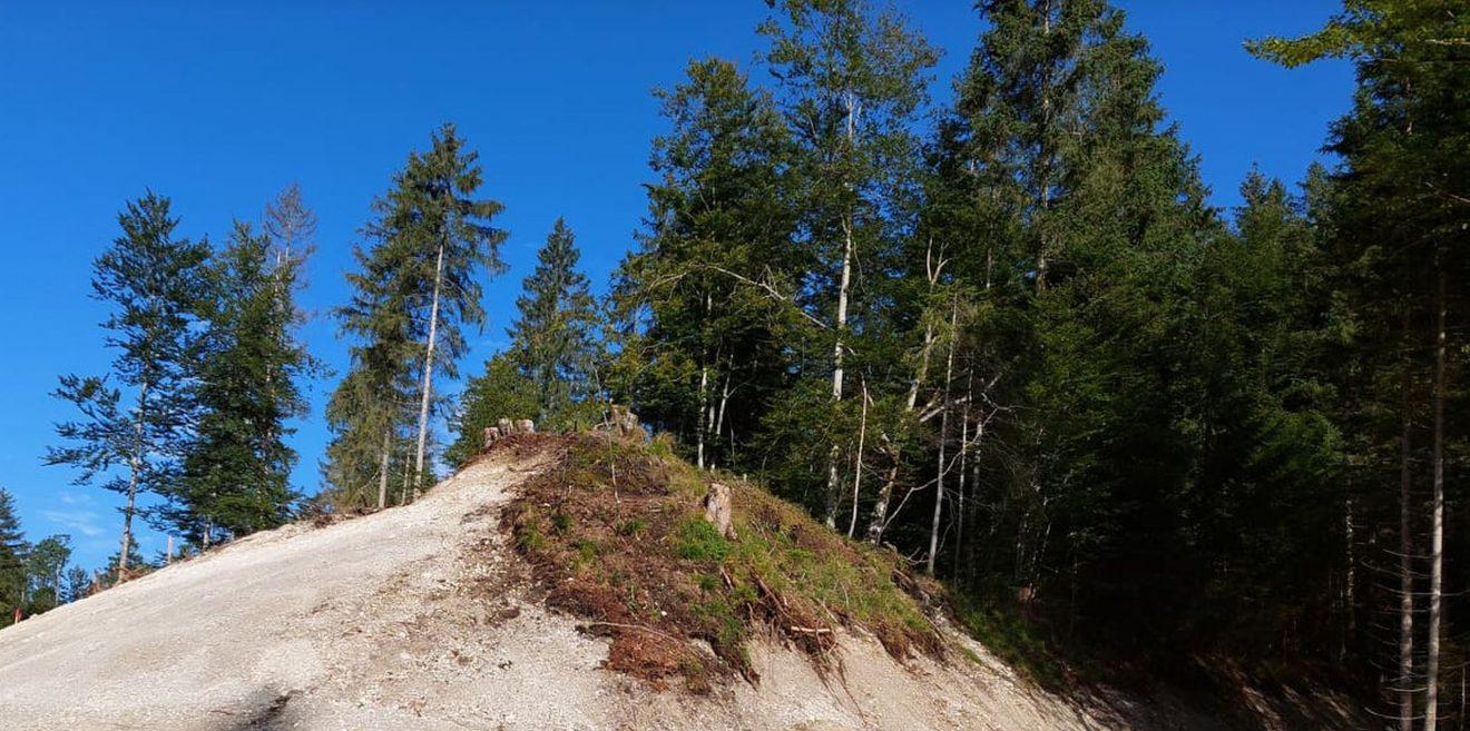 Ab Zeitpunkt 5:25 - Forstnutzung und Natura2000