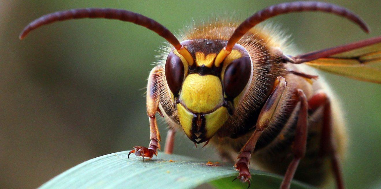 Insekten vernichten kann teuer werden!