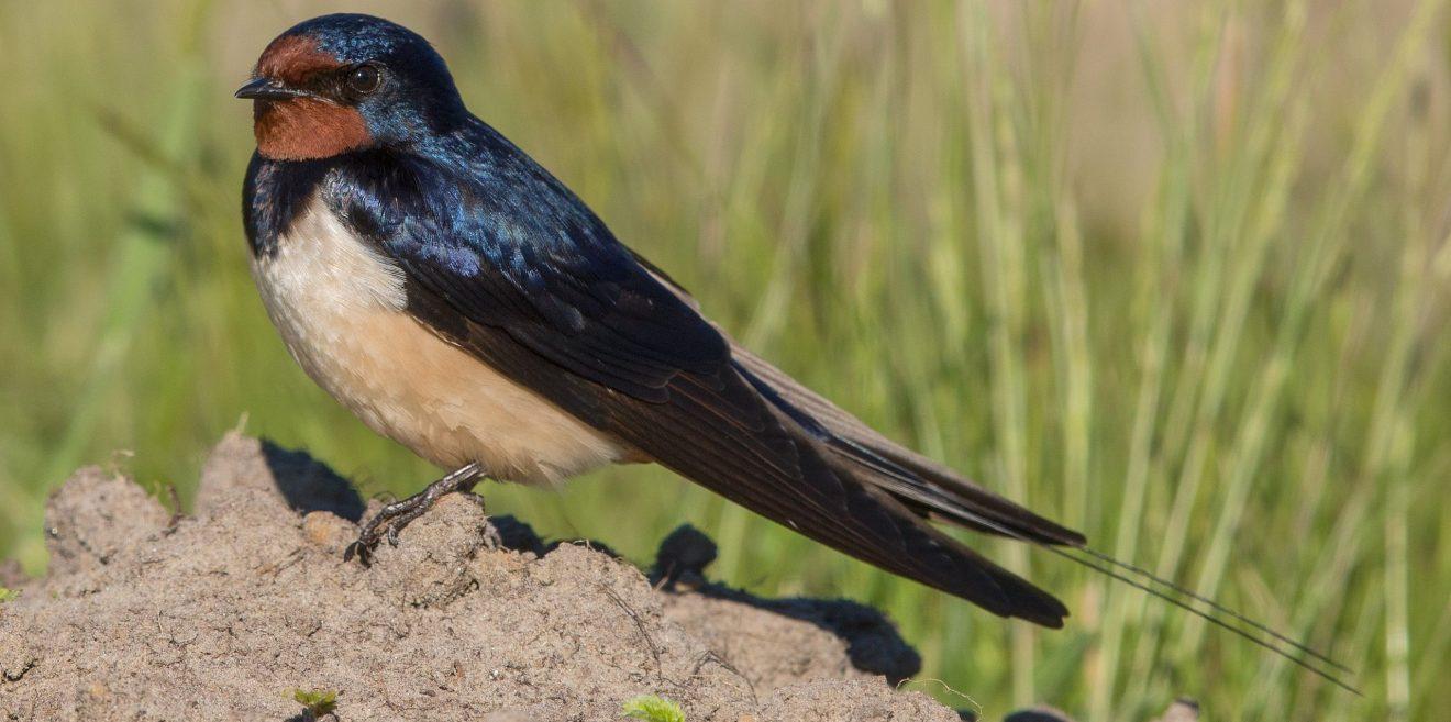 Pressemeldung Deutsche Wildtier Stiftung - Am 9. Oktober ist Welt-Zugvogel-Tag