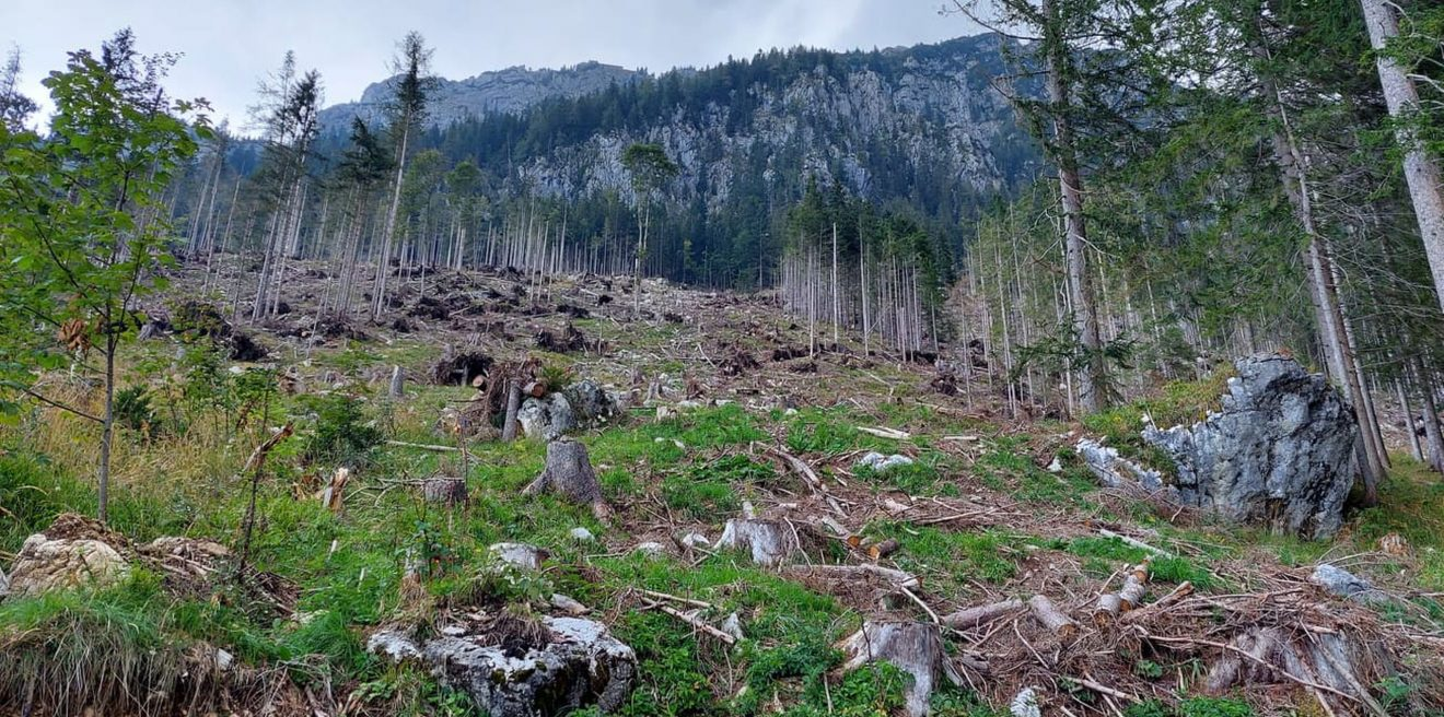 Der Wald braucht uns Menschen nicht - aber wir brauchen den Wald!